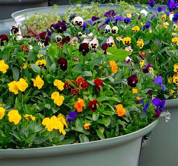 PlantaPod-04-raised-garden-bed